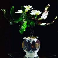 design moderno fiorista bianchi