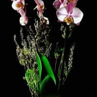 design , autunno e orchidea