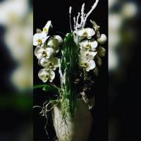 design orchidee in vaso fiorista bianchi